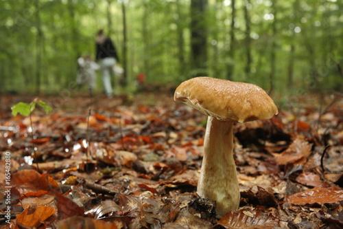 Fotografie, Obraz  Champignon dans les bois