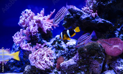 Poster Coral reefs Wonderful and beautiful underwater world with corals and tropical fish.