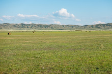 Haymaking Meadow With Background Of Mountains. East Kazakhstan Region.