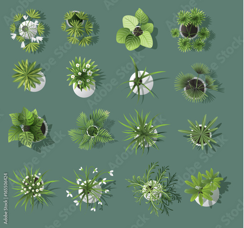 Cadres-photo bureau Kaki set of tree top symbols, for architectural or landscape design, for map, vector