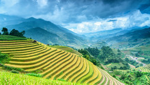 Rice Field On Terrace Mu Cang ...