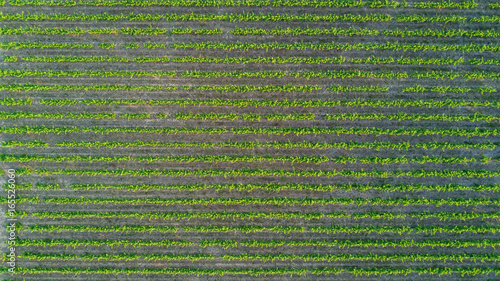 Photo sur Toile Vue aerienne Aerial top view of vineyards landscape from above background, South France