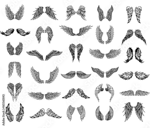 Thirty pairs of wings, graphic illustration Wall mural