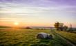 Leinwandbild Motiv Heuballen Strohballen im Sonnenuntergang  Feld Acker Landwirtschaft Erzgebirge