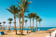 Palm Trees On The Beach In Egy...