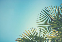 Detail Of Palm Tree On Blue Sky, Background Picture Of Trees With Green Leaves (retro Style Effect)