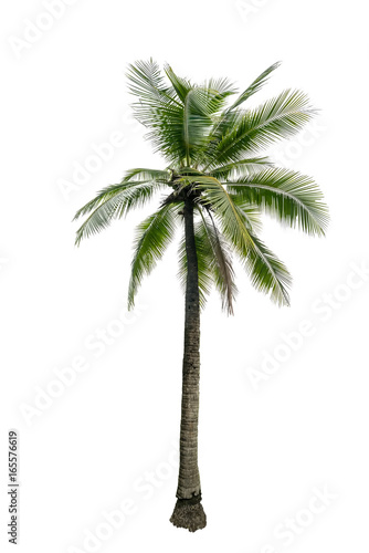 Poster Palmier Green beautiful palm tree isolated on white background