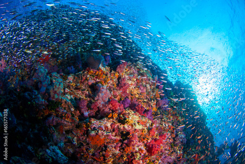 School of Fish over Coral Reef in Similan island, Thailand, Scuba diving Underwater seascape concept.