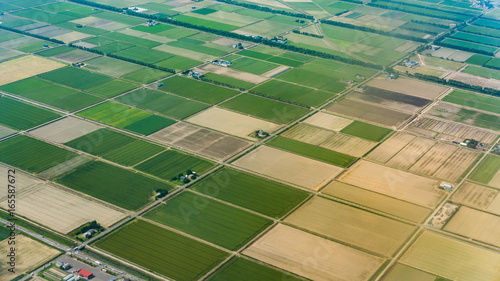 Garden Poster Rice fields Aerial View Of The Natural Plantation Fields
