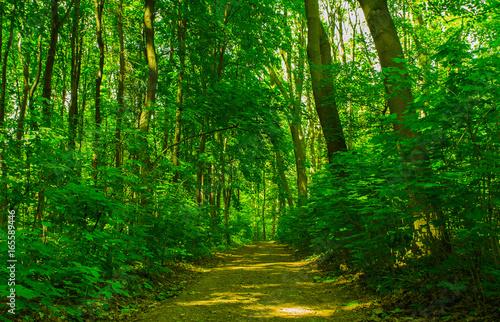 Fototapeta Road through the woods obraz na płótnie