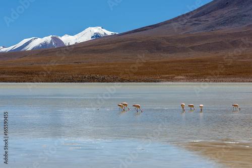 Foto auf AluDibond Lama Laguna Canapa in Altiplano a salt lake, Bolivia