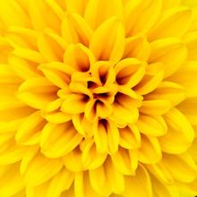A Macro Shot Of Yellow Flower Petals