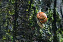 Orange Shell Snail On A Tree