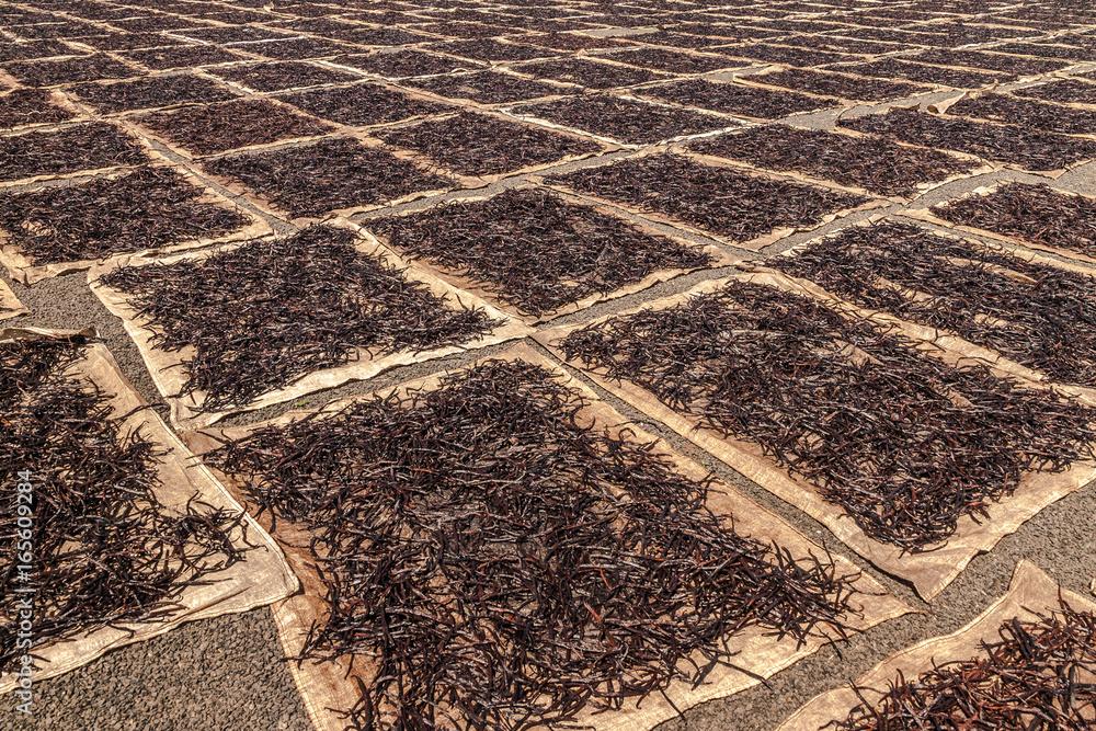Fototapety, obrazy: Drying vanilla
