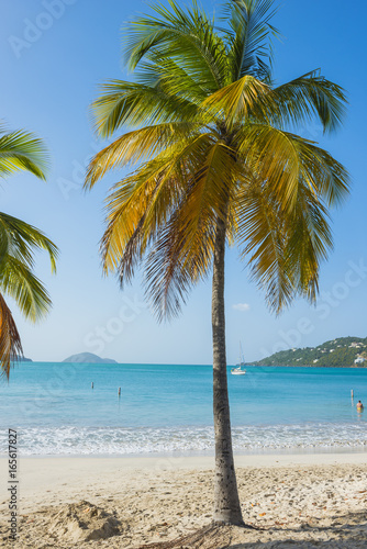 Beach vacation background scenic landscape at the sea with palm trees and blue teal water