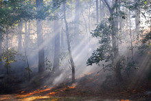 Sunlight Through Fog And Trees...
