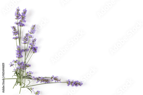Poster Lavendel Lavender plant on white background