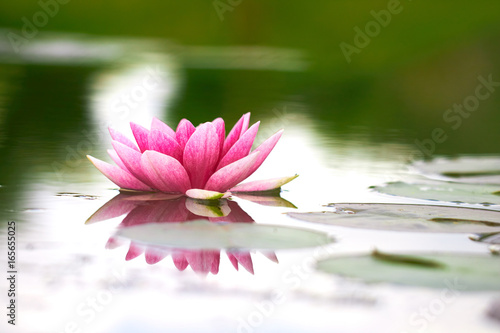 Foto op Canvas Lotusbloem lotus flower in pond