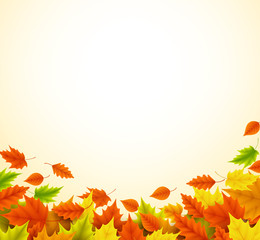 Fall background for autumn season with collection of orange and yellow maple leaves falling and with empty or blank space for text. Vector illustration.