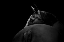 Portrait Of A Horse With A Dark Background