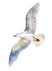 Akvarel galeb izoliran na bijeloj pozadini, ručno nacrtana ilustracija.