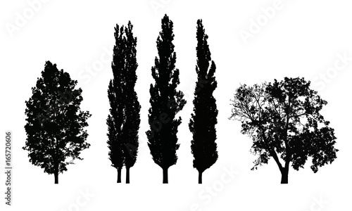 Set of realistic vector silhouettes of deciduous trees isolated on white backgro Wallpaper Mural