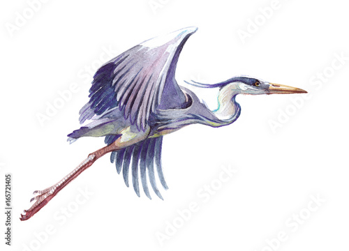 Fotomural Watercolor single heron animal isolated on a white background illustration