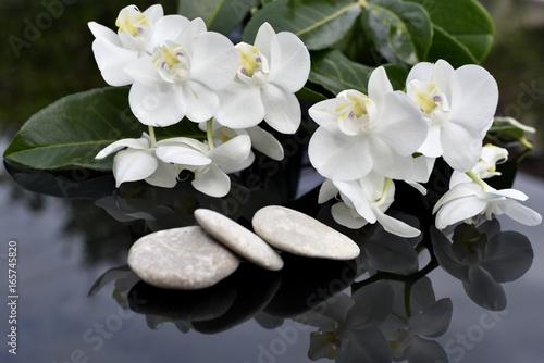 Papiers peints Orchidée Orchidées blanches