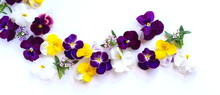 春の花、花びら、白バック、背景素材、室内