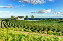 Landscape View Of Farm In Ile D'Orleans, Quebec, Canada With House