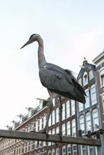 Grey Heron On Amsterdam Street...