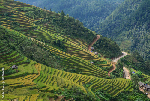 Recess Fitting Rice fields Landscape of terraced rice field in Northern Vietnam