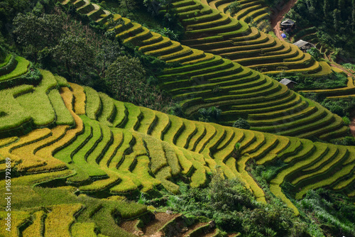 Fotobehang Rijstvelden Landscape of terraced rice field in Northern Vietnam