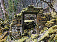 The Remains Of A Derelict Abandoned Stone House Covered In Moss And Overgrown With Trees In A Forest In West Yorkshire England