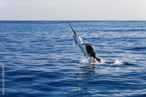 Photo  Marlin sailfish, pacific ocean, Costa Rica, Central America