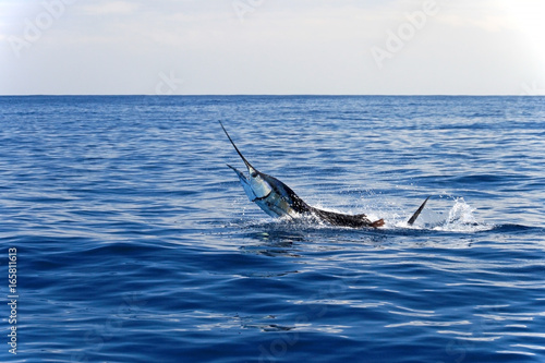 Marlin sailfish, pacific ocean, Costa Rica, Central America