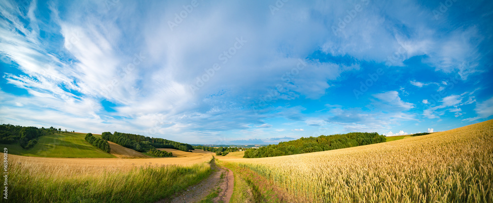 Fototapety, obrazy: Panorama of wheat field in the morning in Kansas