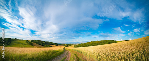 Aluminium Prints Culture Panorama of wheat field in the morning in Kansas