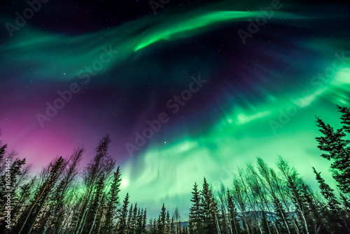 Green and purple Northern Lights over trees in Alaska