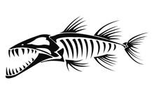 Barracuda Skeleton