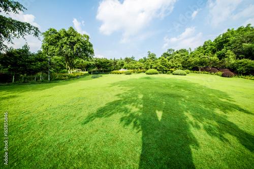 Papiers peints Jardin Grassland landscape and greening environment park background