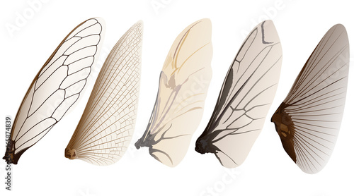 Photographie insect wings