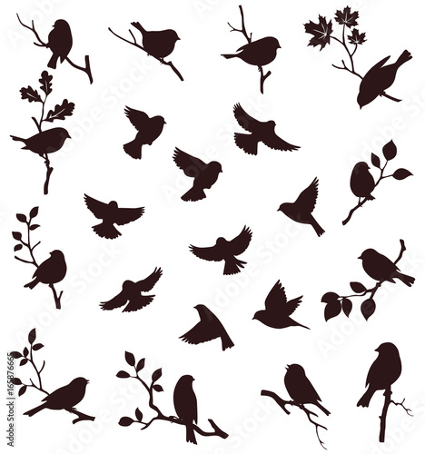Vector set of bird and twig silhouette Fotomurales