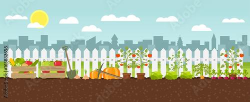 Urban ogrodnictwo warzywo uprawa Płaska konstrukcja grafiki wektorowej