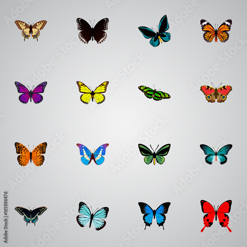 Fotografie, Obraz  Realistic Pipevine, Bluewing, Spicebush And Other Vector Elements