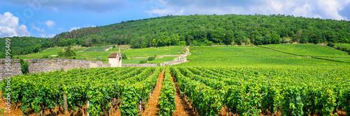 Garden Poster Vineyard Vineyards of Burgundy