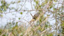 Oiseau à L'envol