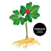 Goldenseal (Hydrastis Canadens...