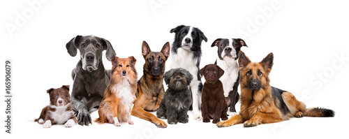 Photo  Group of nine dogs in front of a white background