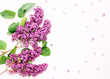 Frame of purple lilac flowers on white background